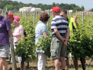 Visite en groupe du Vignoble Vincent