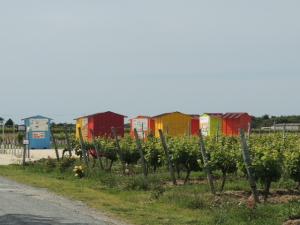 vignes Vignoble-Vincent