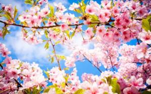 printemps arbres en fleurs
