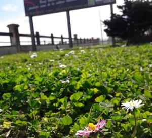 panneau Vignoble Vincent pelouse fleurie