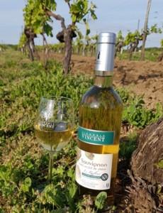 Bouteille et verre de Sauvignon Raffiné dans les vignes