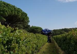 vigne automne vendage